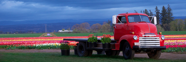 The Tulip Truck