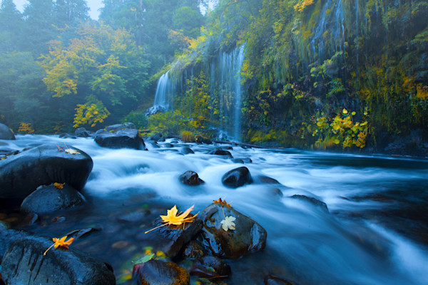 Mossbrae Autumn