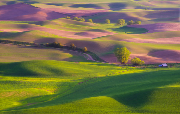 Lijah Hanley Colored Tapestry Palouse