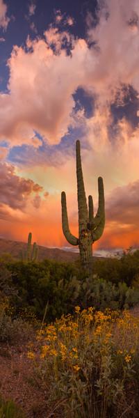 Lijah Hanley Photography Desert Storm