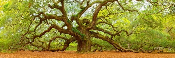 Photograph of Angel Oak