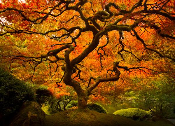 Falls Splendor, Japanese Gardens Tree