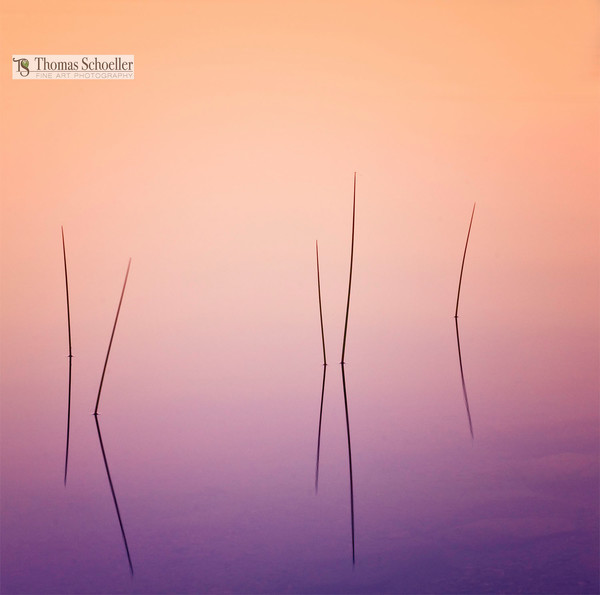 Minimalist fine art photography captures vivid colors reflected behind pond reeds