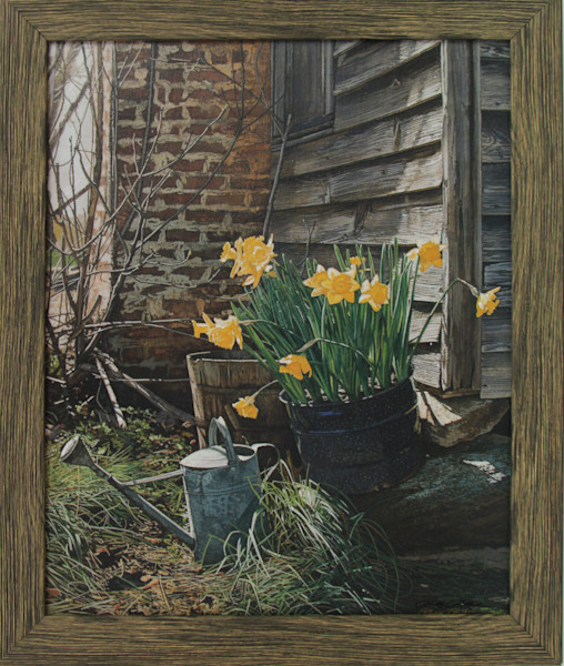 Sunning Daffodils Enhanced Canvas Transfer Art Print for Sale