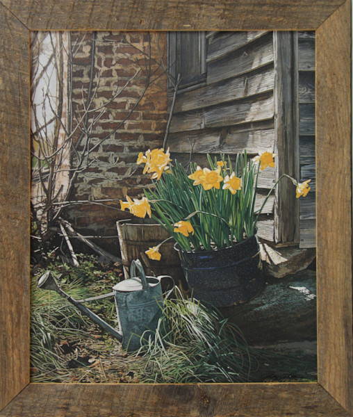 Sunning Daffodils Enhanced Canvas Transfer Framed Art Print for Sale
