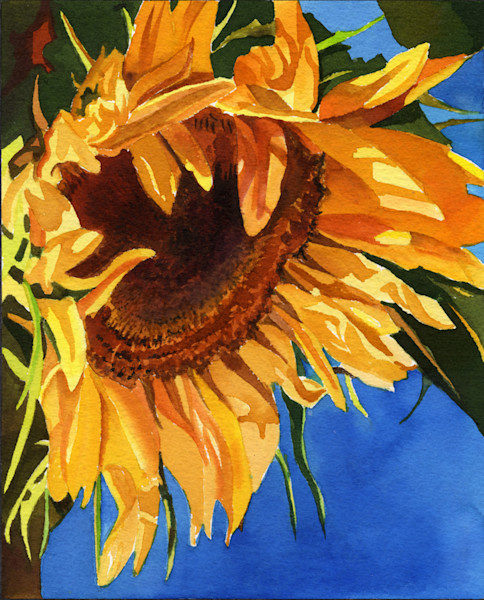 Sunflower by Cally Krallman