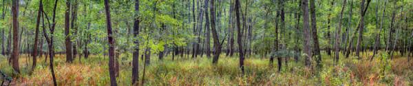Fine Art oklahoma wetland hardwood Forest landscape Photograph