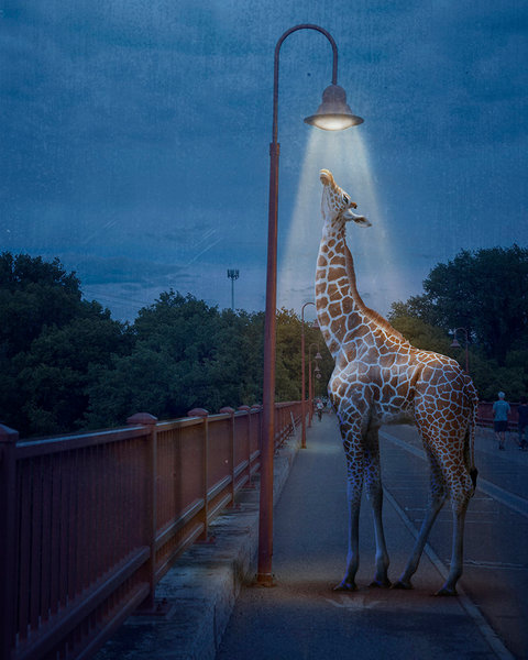 In Bathing in Light, digital artist Kim Whittemore uses her talent for combining animals and everyday locations to create unexpected and surprising images.