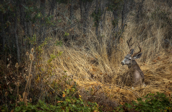 This autumn scene captures a deer at rest the forest, photographed by David Lorenz Winston