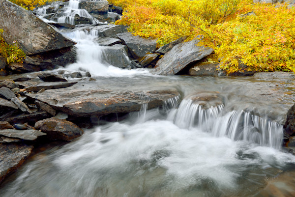A mountain stream high in the Chugach Mountain Range at peak fall colors.