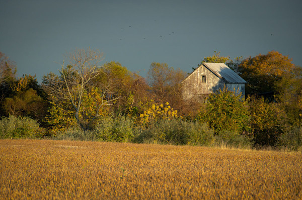 Abandoned Barn In The Trees Limited Edition Signed Fine Art Landscape Photograph by Melissa Fague