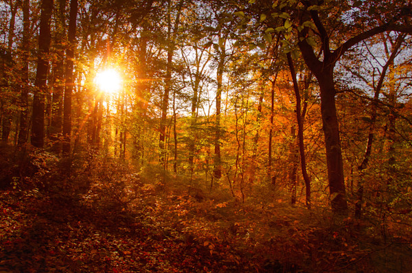 Autumn Sunset Limited Edition Signed Fine Art Landscape Photograph by Melissa Fague