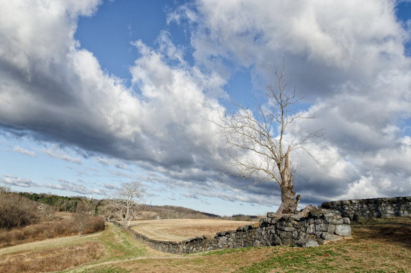 Dead Tree and Stone Wall Limited Edition Signed Fine Art Landscape Photograph by Melissa Fague