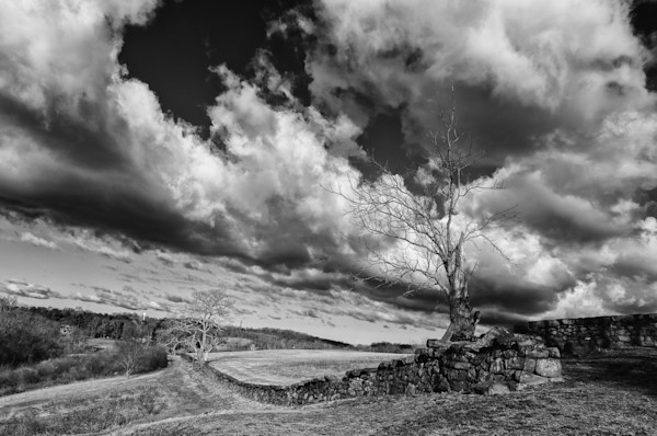 Dead Tree and Stone Wall Black and White Limited Edition Signed Fine Art Landscape Photograph by Melissa Fague