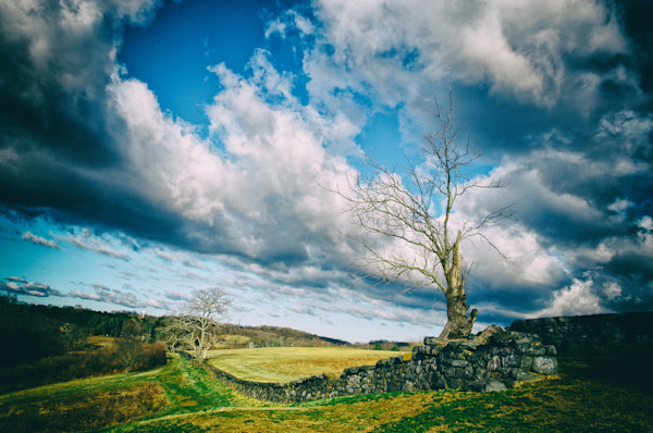 Dead Tree and Stone Wall Colorized Limited Edition Signed Fine Art Landscape Photograph by Melissa Fague