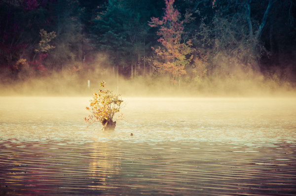 Golden Mist on Waples Pond Limited Edition Signed Fine Art Landscape Photograph by Melissa Fague