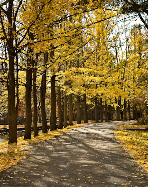 Fall Path Limited Edition Signed Fine Art Landscape Photograph by Melissa Fague