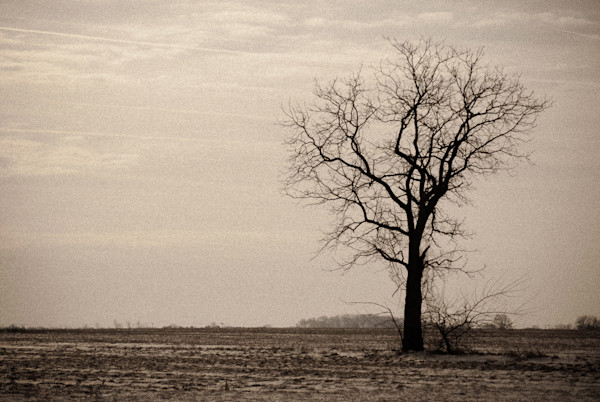 Lonely Tree Limited Edition Signed Fine Art Landscape Photograph by Melissa Fague