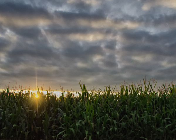 Rows of Corn Limited Edition Signed Fine Art Landscape Photograph by Melissa Fague