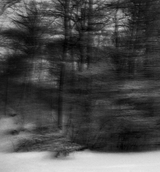 Trees - Forest - Fine Art Prints - Alexander Eros Rocco