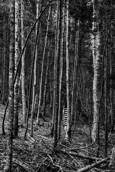 Trees - Fine Art Prints for Sale - Metal, Baryta, Acrylic