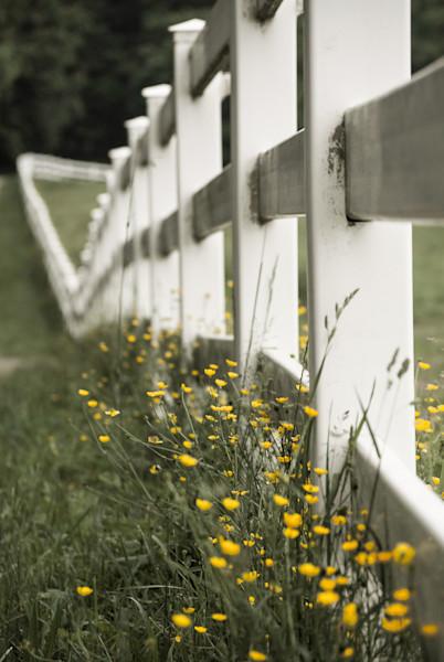 Specks of Sunshine Limited Edition Signed Fine Art Landscape Photograph by Melissa Fague