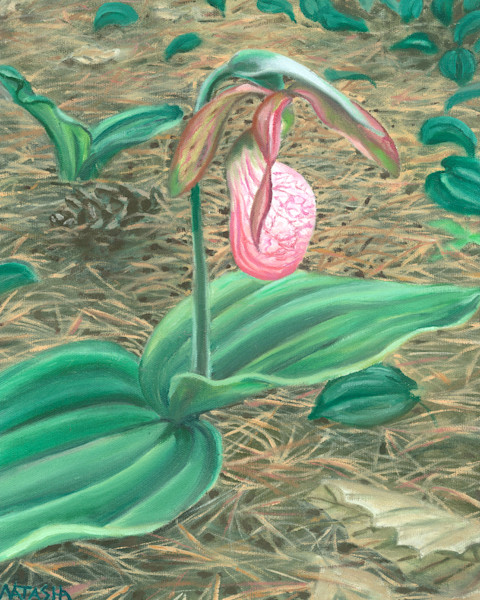 Pink Lady Slipper Art for Sale