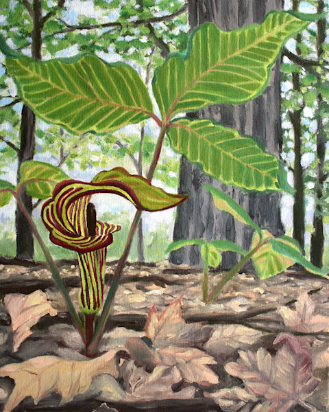 Jack in the Pulpit Art for Sale