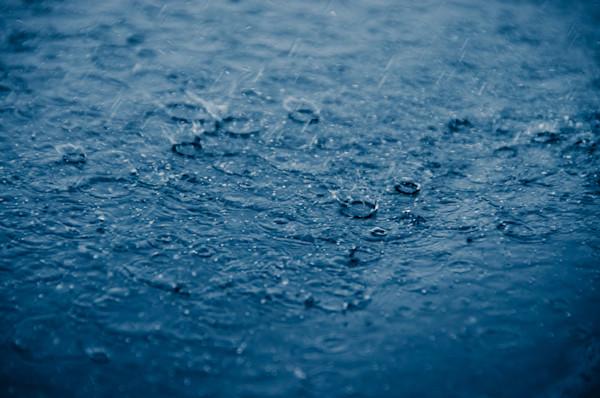 Let it Rain Limited Edition Signed Fine Art Nature Photograph by Melissa Fague