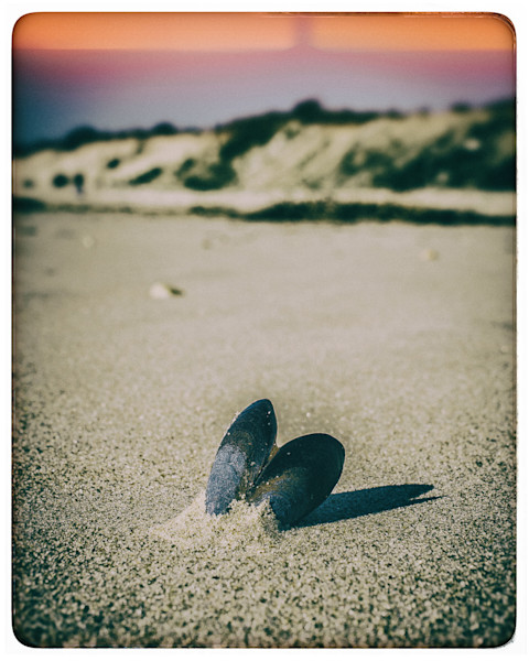 Lone Mussel Seashell Limited Edition Signed Fine Art Nature Photograph by Melissa Fague