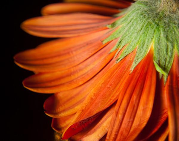 Petite Petals Limited Edition Signed Fine Art Nature Photograph by Melissa Fague