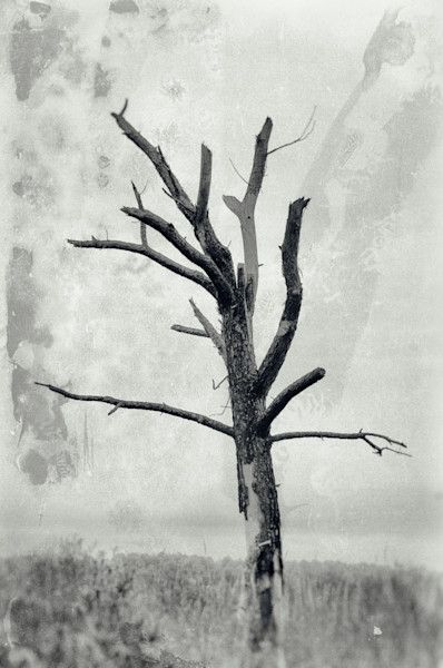 Rotting Away Alone Limited Edition Signed Fine Art Nature Photograph by Melissa Fague