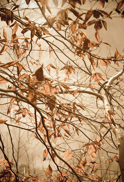 Aged Winter Leaves Limited Edition Signed Fine Art Nature Photograph by Melissa Fague