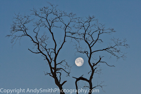 fine art photogrpah of Fulll moon setting in the early morning in Valley Forge Park