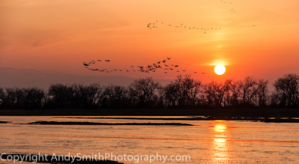 fine art photograph of white pelicans and sandhill cranes in the sunset on the Platte River