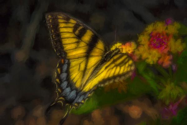 Butterfly  Eastern Tiger Swallowtail|Wall Decor fleblanc