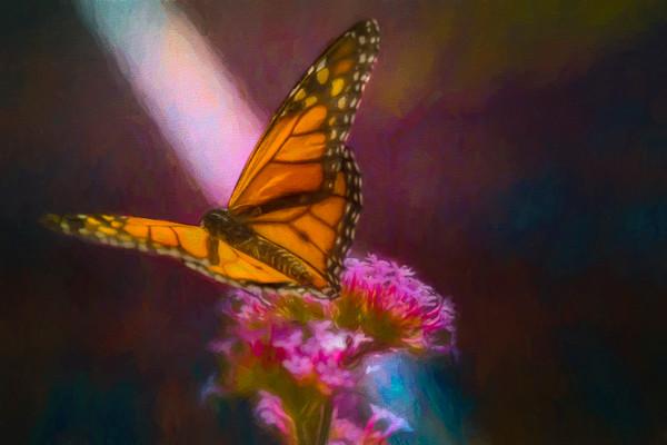 Monarch Butterfly In The Sun Painting|Wall Decor fleblanc