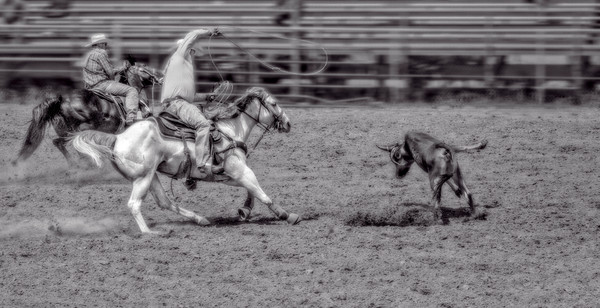 Black and White Rodeo Cowboys, Western Ranch Cattle Roping fleblanc