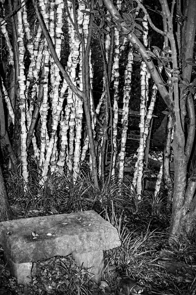"""""""Bone Trees"""" is a fine art photograph by Todd Suttles"""