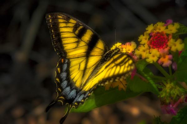 Butterfly Flower Swallowtail Tiger|Wall Decor fleblanc