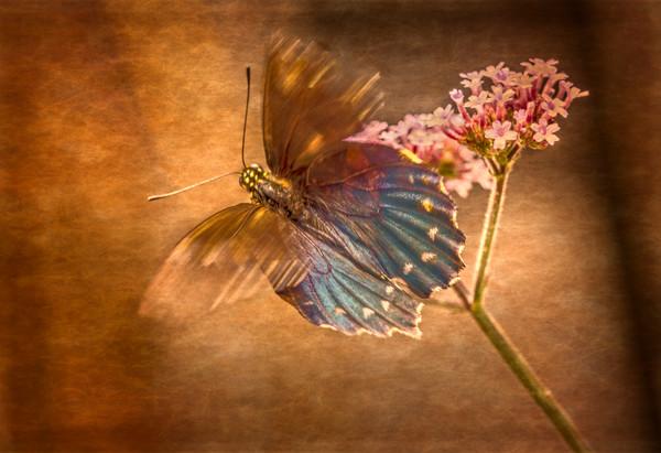Butterfly Flower Vintage Texture|Wall Decor fleblanc