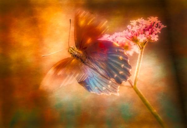 Butterfly Flower Ethereal Vintage Soft |Wall Decor fleblanc