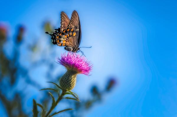 Butterfly Flower Summer Interlude Blue Sky|Wall Decor fleblanc