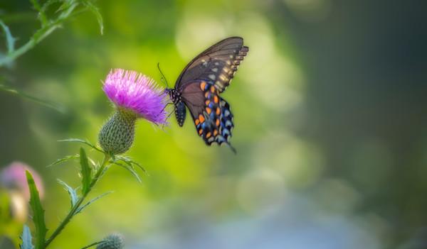 Butterfly Flower Papillon Painting|Wall Decor fleblanc