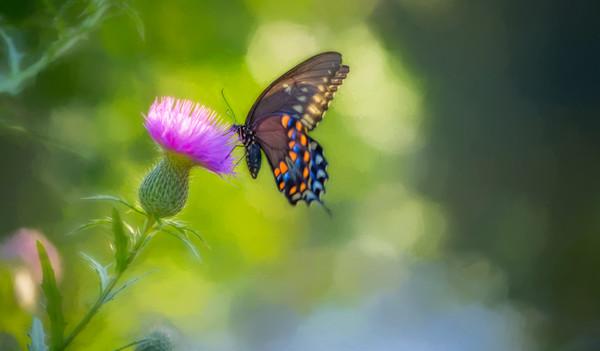 Butterfly Pink Flower Sunshine Bokah|Wall Decor fleblanc