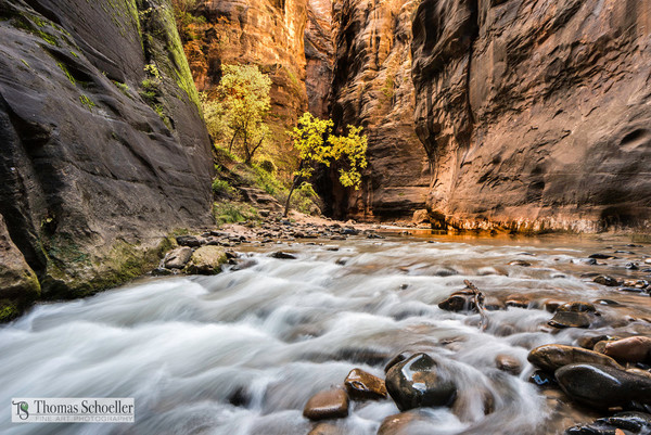 Enlightened - Zion River narrows