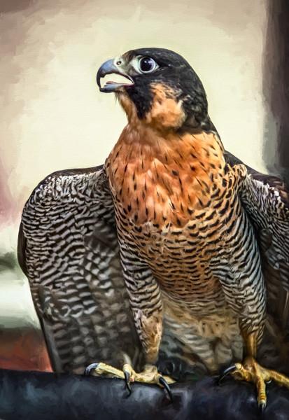 Peregrine Predator Wanderer Falcon|Wall Decor fleblanc