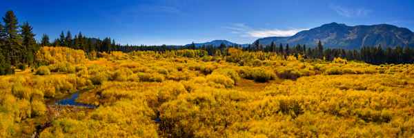 Fall into Tahoe, Fine Art Photograph of Fall colors in Tahoe