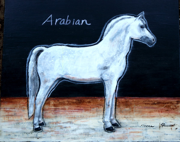 White Arabian Horse, Original Paintings, Fine Art Prints for Sale by Teena Stewart