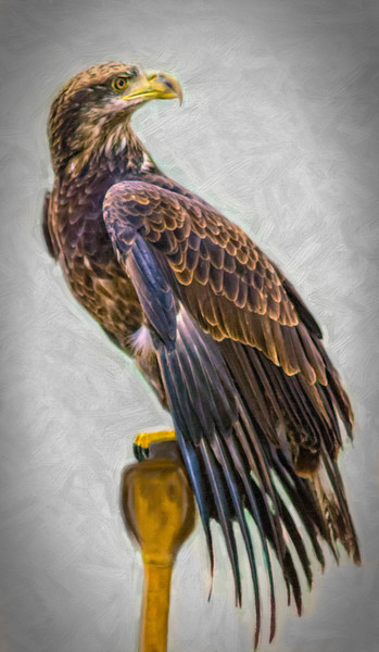 Golden Eagle Bird Of Prey Predator  Decor|Wall Decor fleblanc